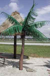 Six Foot Palm